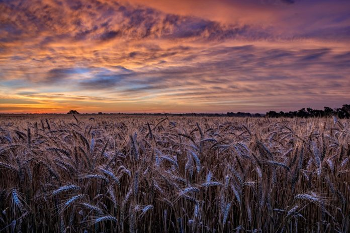 Kansas field