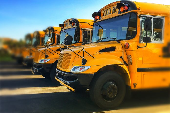 View of front end of gold colored public transportation vehicles used in American education system in a line showing windshields and engine grills